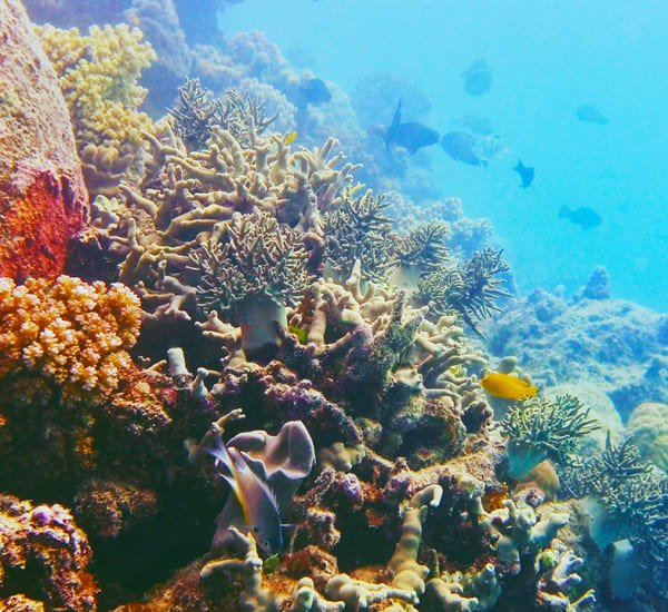 Coral landscape Great Barrier Reef by Natasha McLuhan